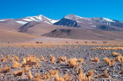 Bolivia y sus zonas protegidas